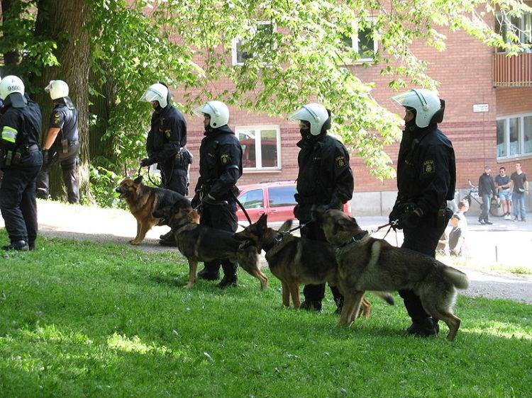 Perros pastor aleman controlando una manifestacion