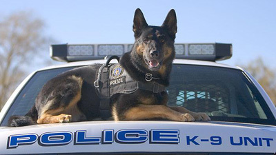pastor aleman perro policia k9