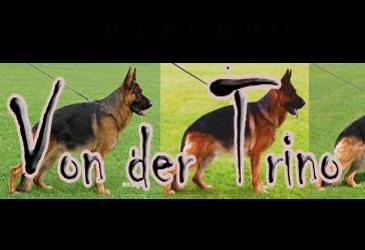 Criadero von der trino, especialista en cachorros pastor aleman, Guadalajara Jalisco